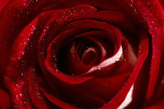 Brote color de rosa del primer Imagen de archivo