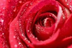 Brote color de rosa del primer Imágenes de archivo libres de regalías