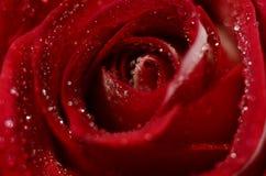 Brote color de rosa del primer Foto de archivo