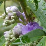 Brote de flor Foto de archivo libre de regalías