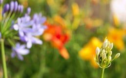 Brote de flor en jardín borroso foto de archivo libre de regalías