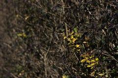 Brote de la primavera Foto de archivo libre de regalías