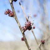 Brote de la primavera de la puntilla Imagenes de archivo