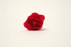 Brote de Rose Imagen de archivo