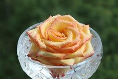 Brote de Rose en un cristal Imágenes de archivo libres de regalías
