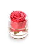 Brote de Rose en vidrio con agua Fotografía de archivo libre de regalías