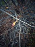 Brote de un árbol en primavera Fotografía de archivo libre de regalías