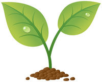 Brote del resorte con gotas del agua libre illustration