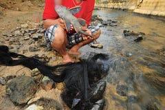 Brote extranjero de la especie de Plecostomus (pescado del lechón) en el río Imagen de archivo