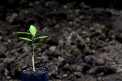 Brote para plantar en la granja Imagen de archivo
