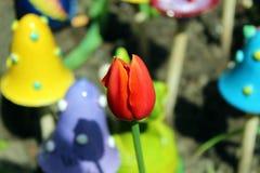 Brote rojo del tulipán Fotografía de archivo