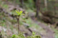 Brote solo en el bosque en foco Imagenes de archivo