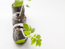 Brote verde Foto de archivo libre de regalías