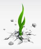 Brote verde, eliminando de piedras