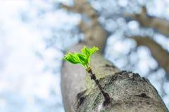 Brote verde en el árbol Foto de archivo