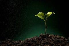 Brote verde que crece de suelo Foto de archivo libre de regalías