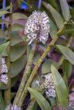 Brotes blancos minúsculos de la orquídea en un jardín fotos de archivo libres de regalías