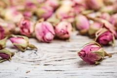Brotes color de rosa del té Fotografía de archivo libre de regalías