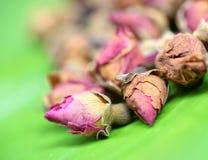 Brotes color de rosa del té de la flor Fotos de archivo libres de regalías