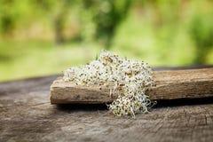 Brotes de alfalfa Imagen de archivo libre de regalías