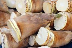 Brotes de bambú Fotos de archivo libres de regalías