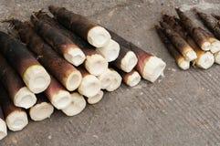 Brotes de bambú Imágenes de archivo libres de regalías
