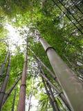 Brotes de bambú Imagen de archivo libre de regalías
