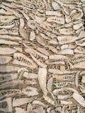 Brotes de bambú secados Foto de archivo