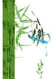 Brotes de bambú y un vidrio de agua potable Fotos de archivo