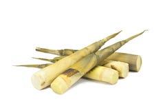 Brotes de bambú Foto de archivo libre de regalías