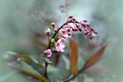 Brotes de flor con gotas del agua imagen de archivo libre de regalías