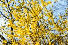 Brotes de flor jovenes en primavera en rosa, amarillo y blanco en primavera Imagen de archivo libre de regalías