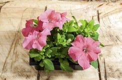 Brotes de flores Imagen de archivo libre de regalías