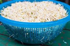 Brotes de haba, brotes de la soja Foto de archivo libre de regalías