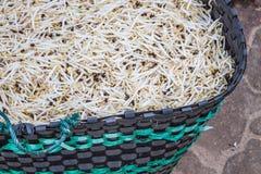 Brotes de haba en la cesta imagen de archivo