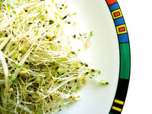 Brotes de la alfalfa y de haba Fotografía de archivo libre de regalías