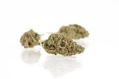 Brotes de la marijuana Foto de archivo libre de regalías
