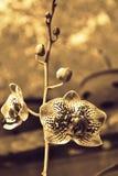 Brotes de la orquídea n Imagen de archivo libre de regalías
