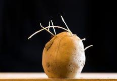 Brotes de la patata Fotografía de archivo libre de regalías