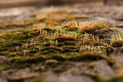 Brotes de la primavera de plantas verdes Imagen de archivo
