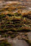 Brotes de la primavera de plantas verdes Fotografía de archivo libre de regalías