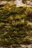 Brotes de la primavera de plantas verdes Fotos de archivo libres de regalías