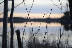 Brotes de la primavera en el bosque Imagen de archivo