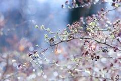 Brotes de la primavera en ramas, en un fondo coloreado Foco selectivo Profundidad del campo baja Imagen entonada imagen de archivo
