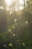 Brotes de la primavera en una rama Imagen de archivo libre de regalías