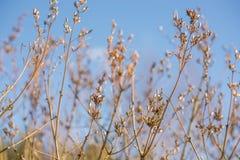 Brotes de la rama de árbol de la primavera Fotos de archivo libres de regalías