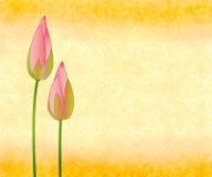Brotes de Lotus en fondo inconsútil Imagen de archivo libre de regalías