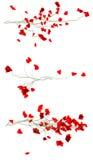Brotes de una planta de corazones enamorados Fotos de archivo