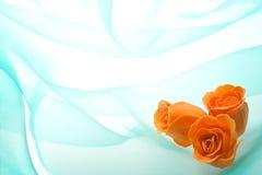 Brotes de una rosa en un verde Foto de archivo libre de regalías
