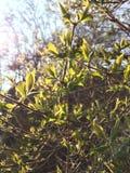 Brotes del árbol Foto de archivo libre de regalías